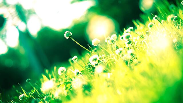 Blumenwiese - Trennung verarbeiten